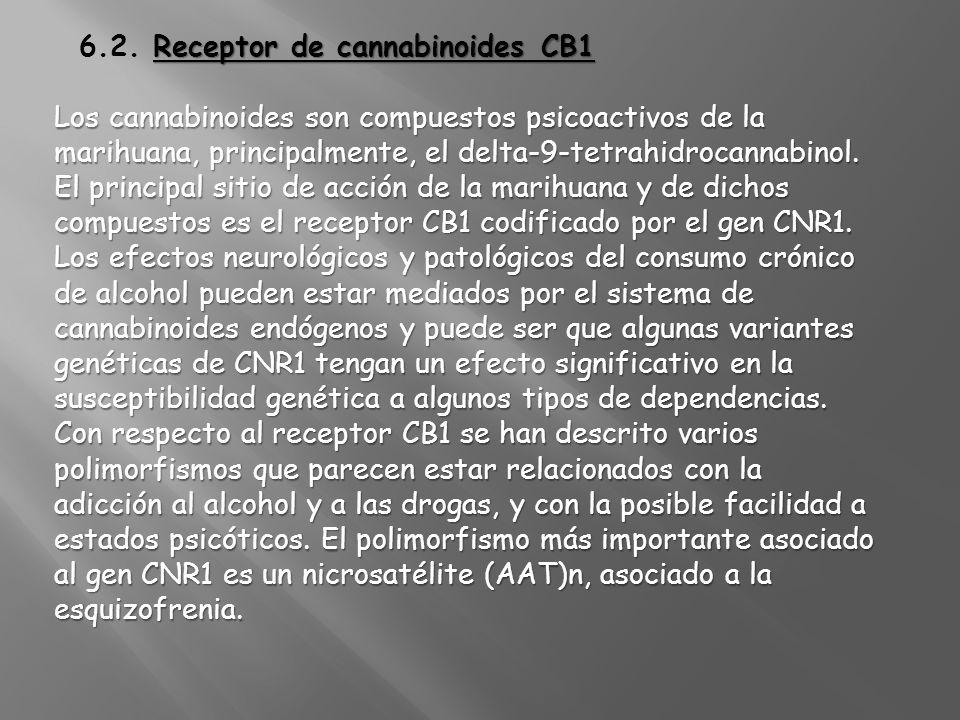 6.2. Receptor de cannabinoides CB1