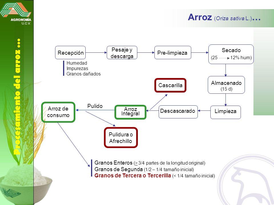 Arroz (Oriza sativa L.)…
