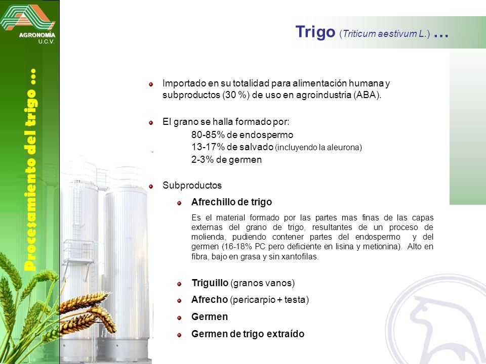 Trigo (Triticum aestivum L.) …