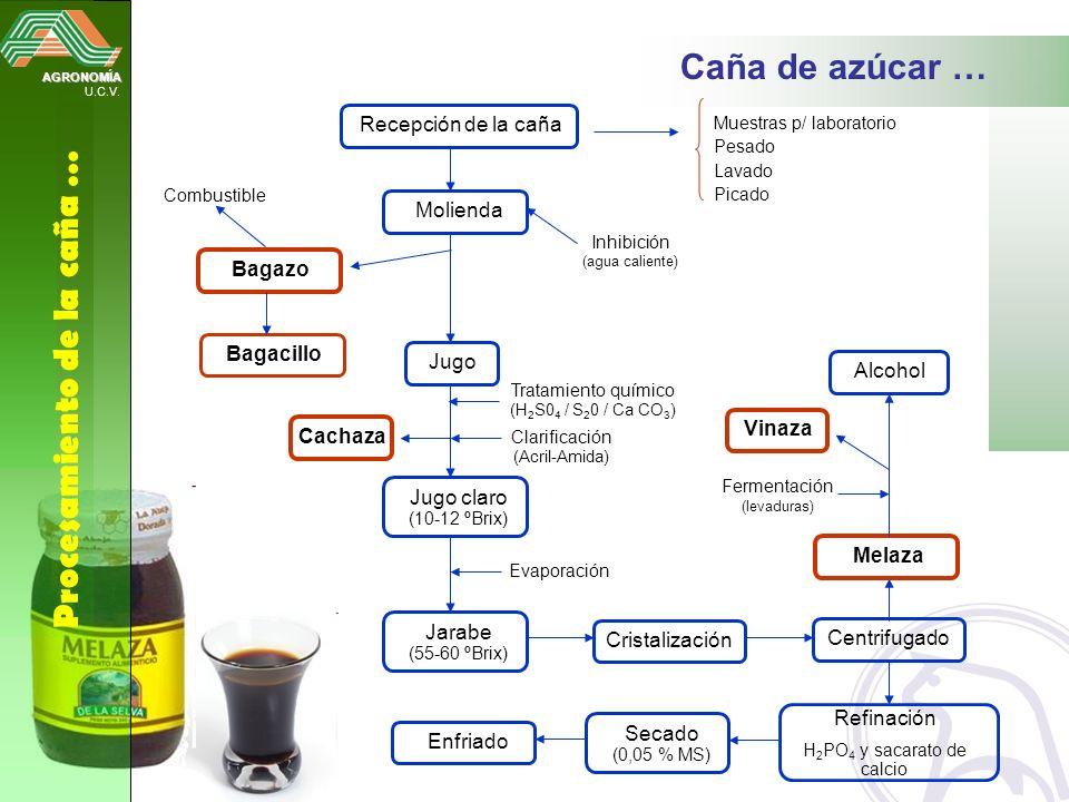 H2PO4 y sacarato de calcio