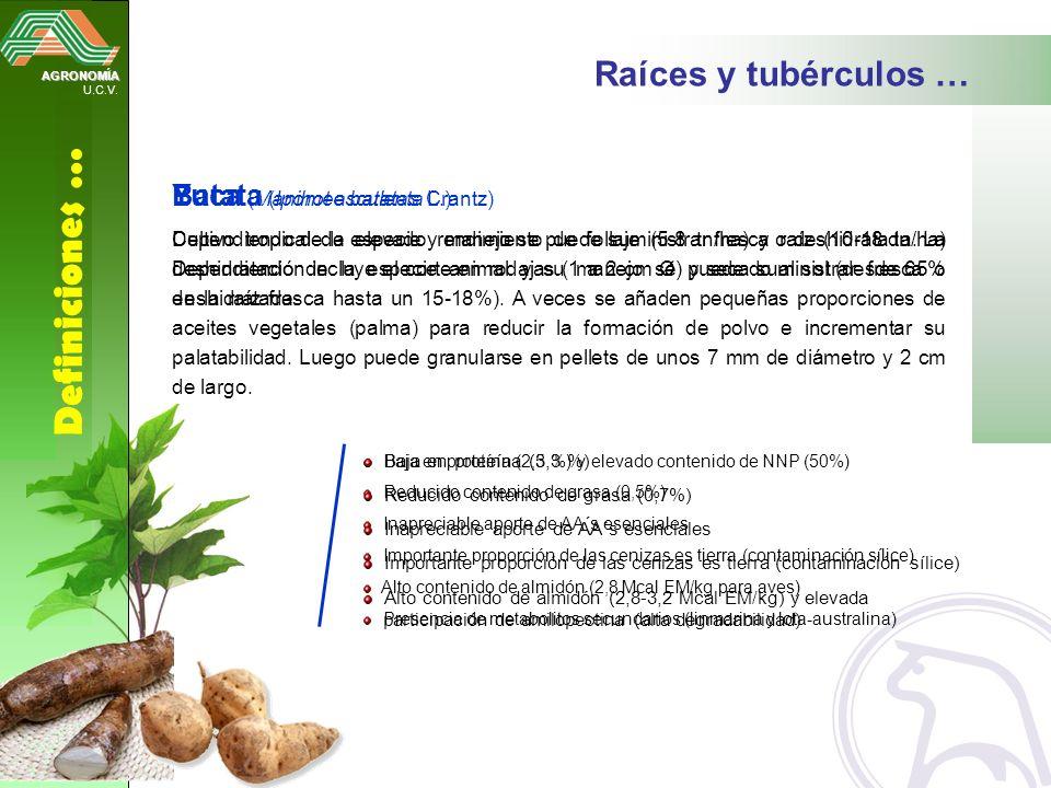 Definiciones … Raíces y tubérculos … Yuca (Manihot esculenta Crantz)