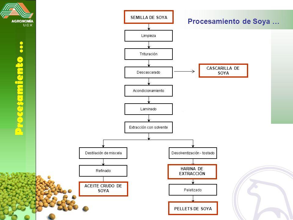 Procesamiento … Procesamiento de Soya … SEMILLA DE SOYA