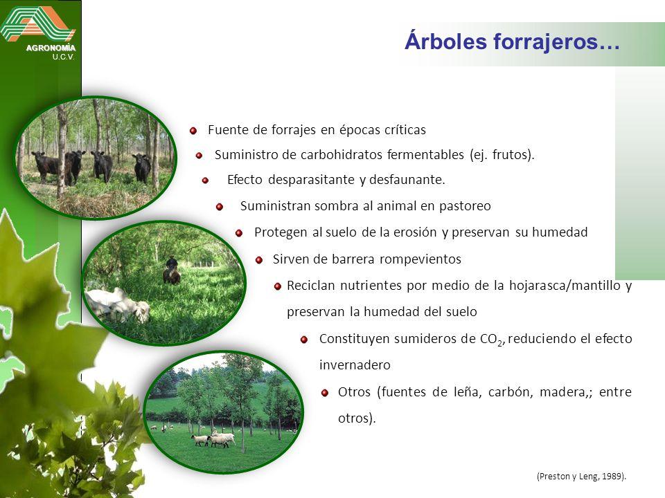 Árboles forrajeros… Fuente de forrajes en épocas críticas