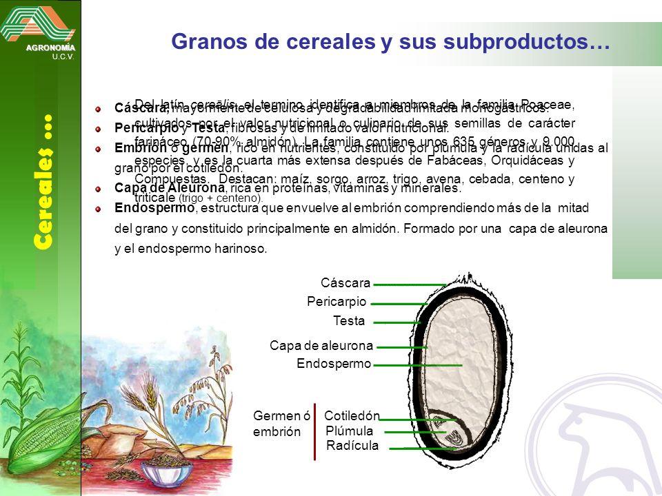 Cereales … Granos de cereales y sus subproductos…