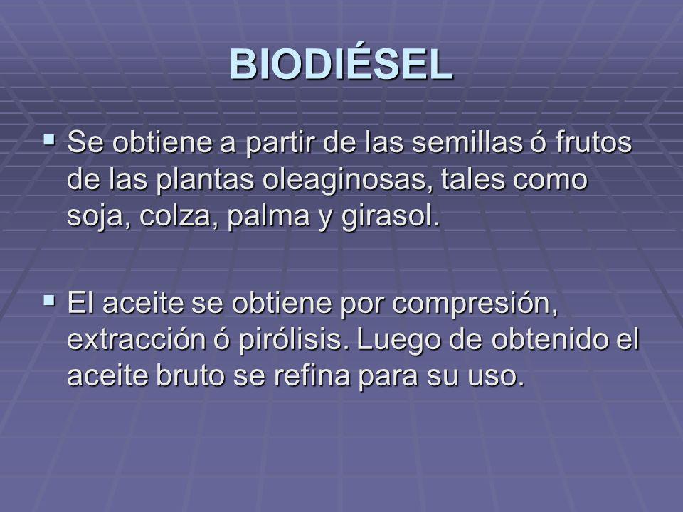 BIODIÉSEL Se obtiene a partir de las semillas ó frutos de las plantas oleaginosas, tales como soja, colza, palma y girasol.