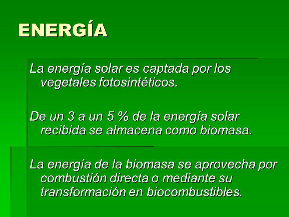 ENERGÍA La energía solar es captada por los vegetales fotosintéticos.