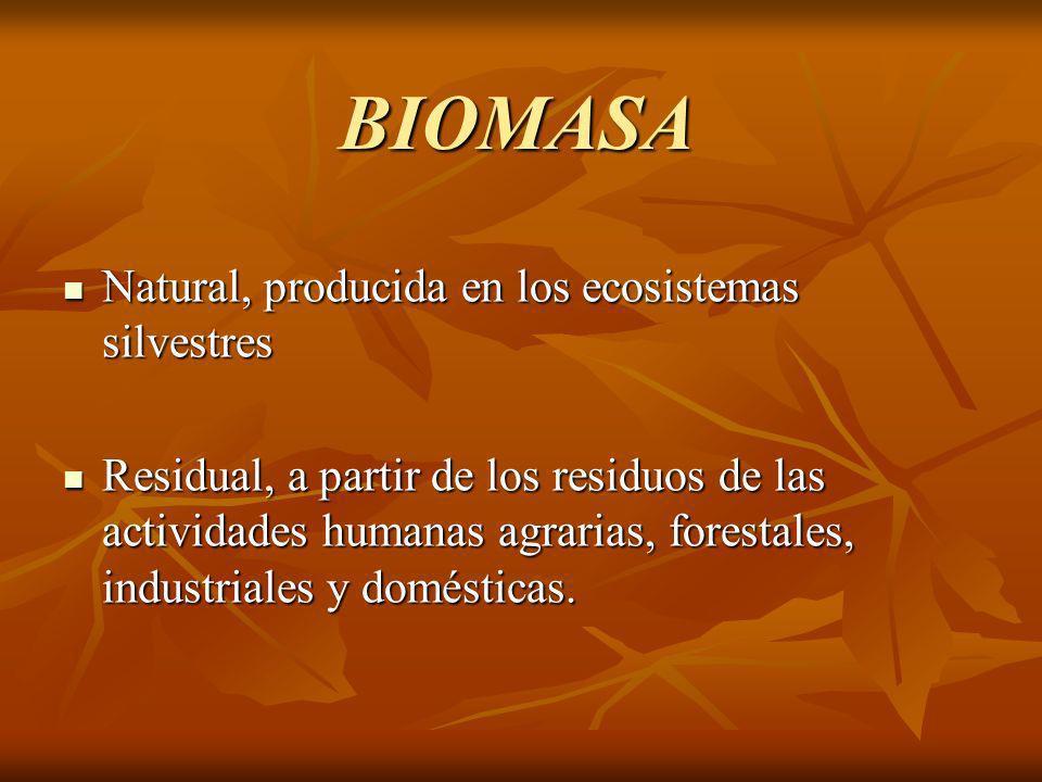 BIOMASA Natural, producida en los ecosistemas silvestres