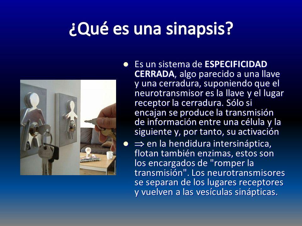 ¿Qué es una sinapsis