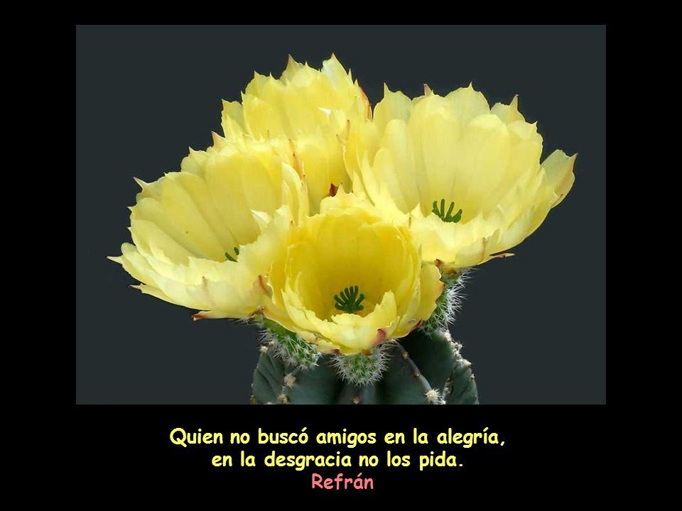Quien no buscó amigos en la alegría, en la desgracia no los pida.