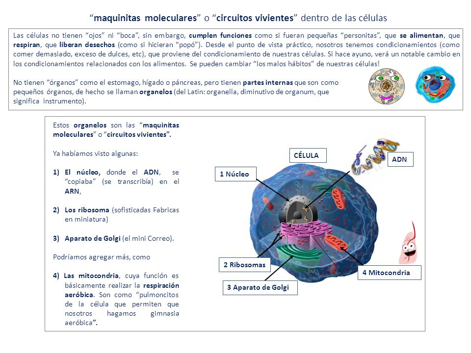 maquinitas moleculares o circuitos vivientes dentro de las células