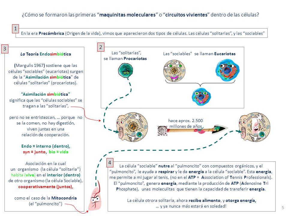 ¿Cómo se formaron las primeras maquinitas moleculares o circuitos vivientes dentro de las células
