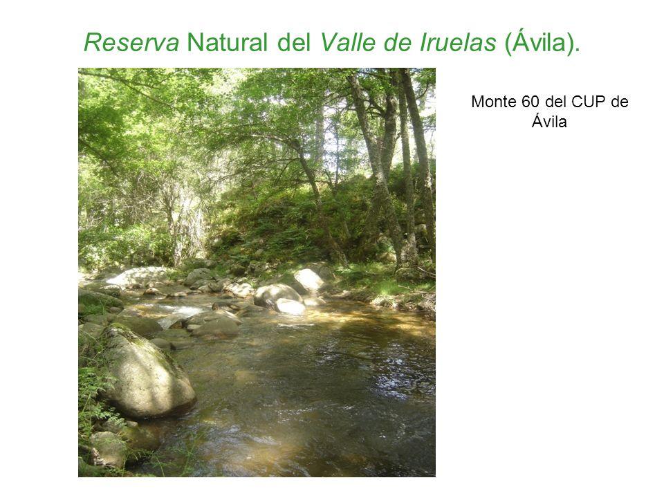 Reserva Natural del Valle de Iruelas (Ávila).
