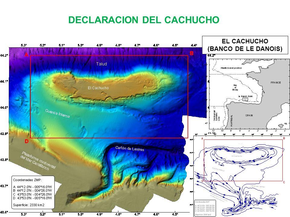 DECLARACION DEL CACHUCHO