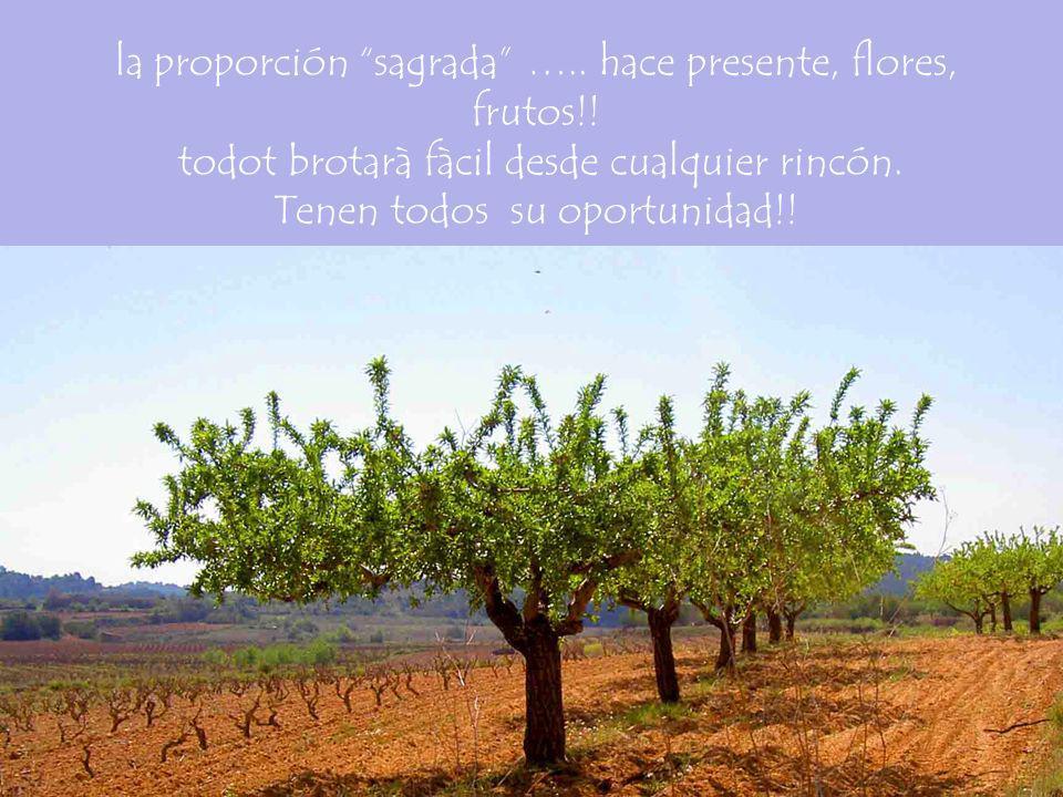 la proporción sagrada …. hace presente, flores, frutos