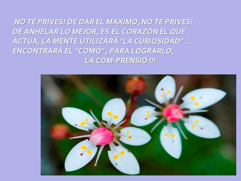 NO TE PRIVES. DE DAR EL MAXIMO, NO TE PRIVES
