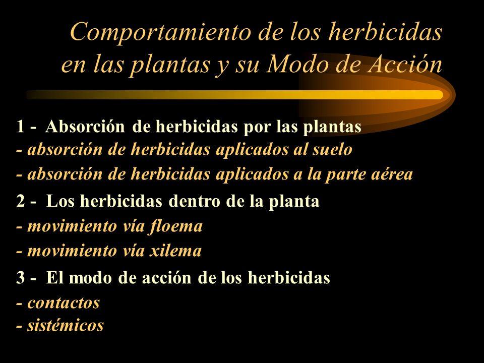 Comportamiento de los herbicidas en las plantas y su Modo de Acción