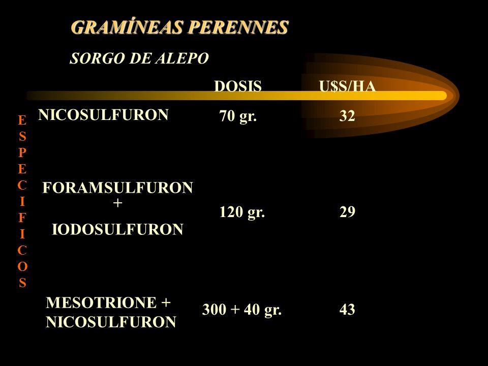 GRAMÍNEAS PERENNES SORGO DE ALEPO DOSIS 70 gr. U$S/HA 32 NICOSULFURON