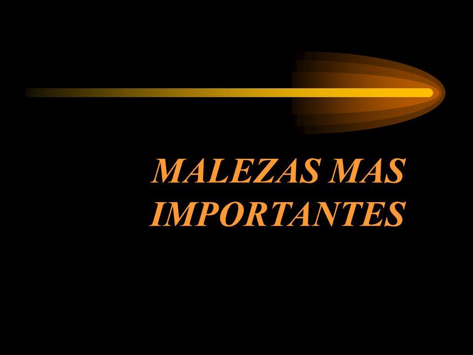 MALEZAS MAS IMPORTANTES
