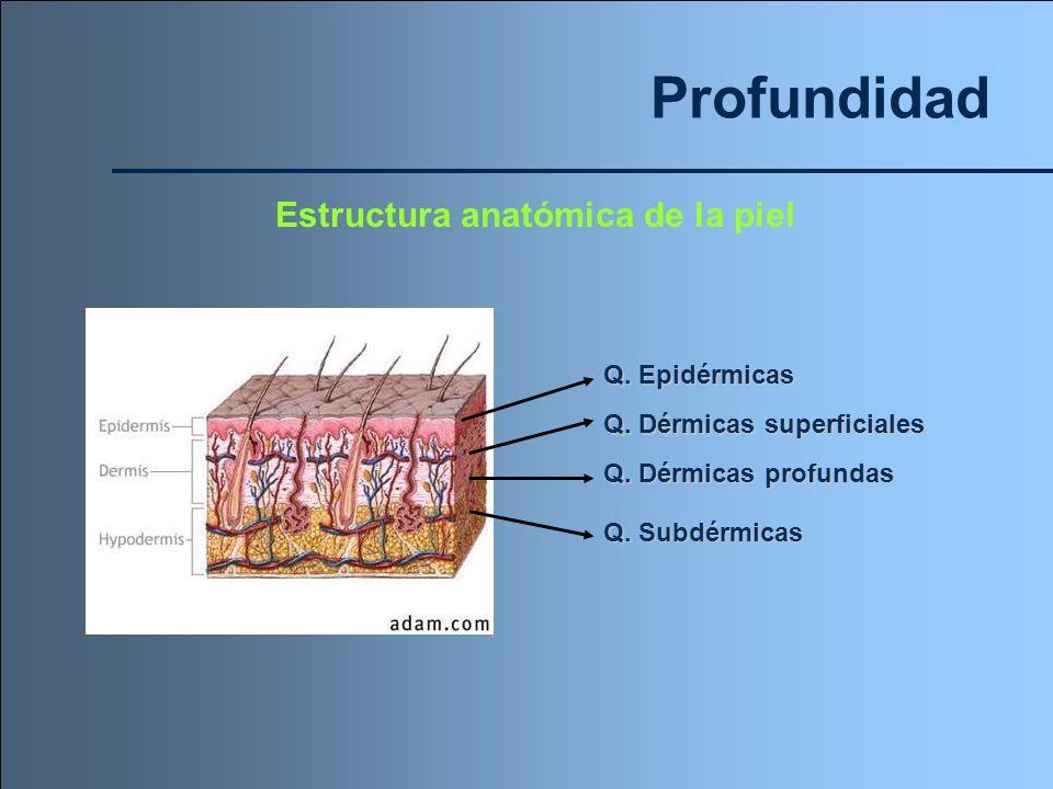 Profundidad Estructura anatómica de la piel Q. Epidérmicas