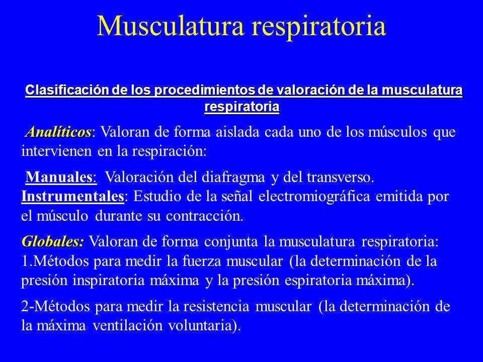 Musculatura respiratoria