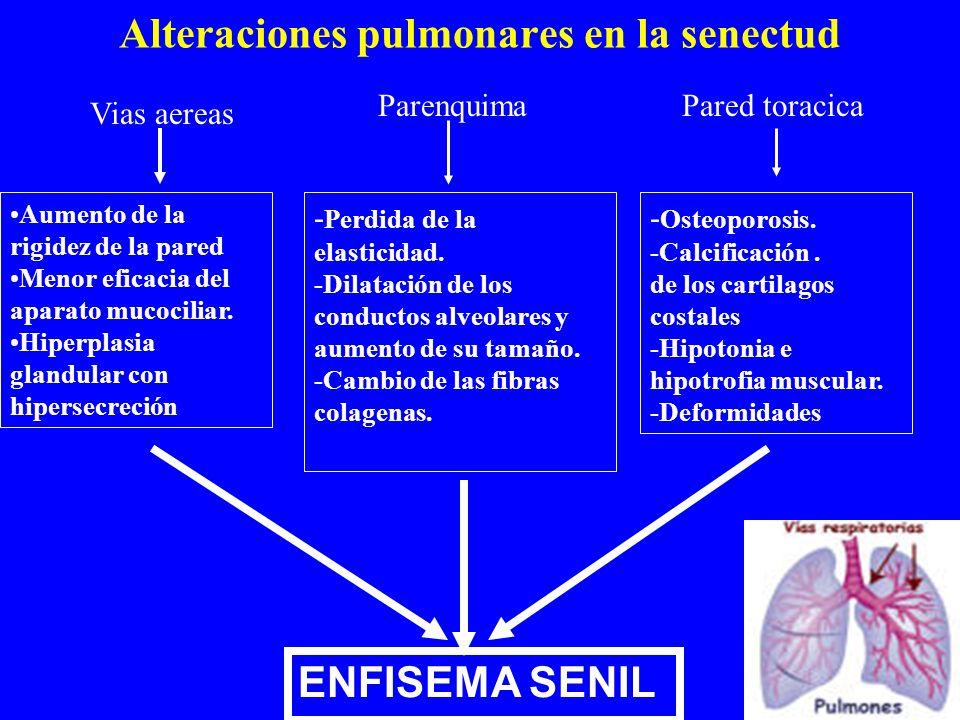 Alteraciones pulmonares en la senectud