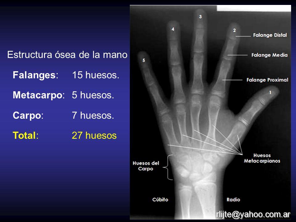 Estructura ósea de la mano