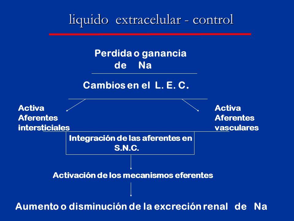 liquido extracelular - control