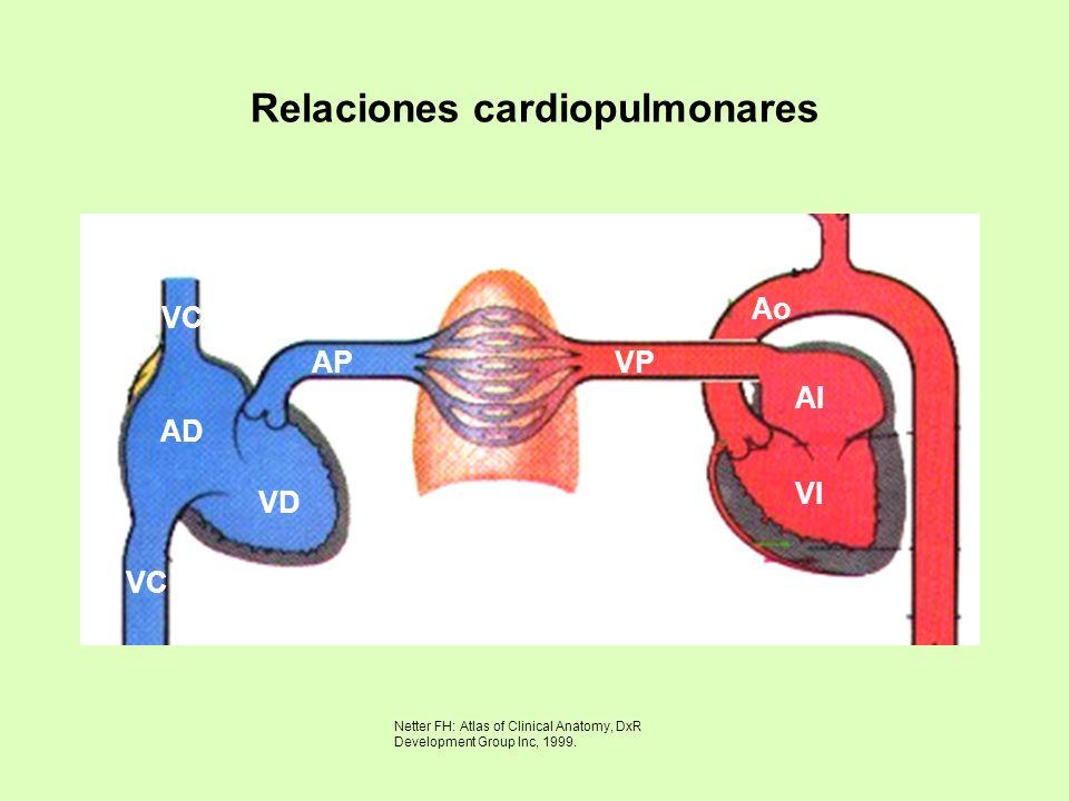 Relaciones cardiopulmonares