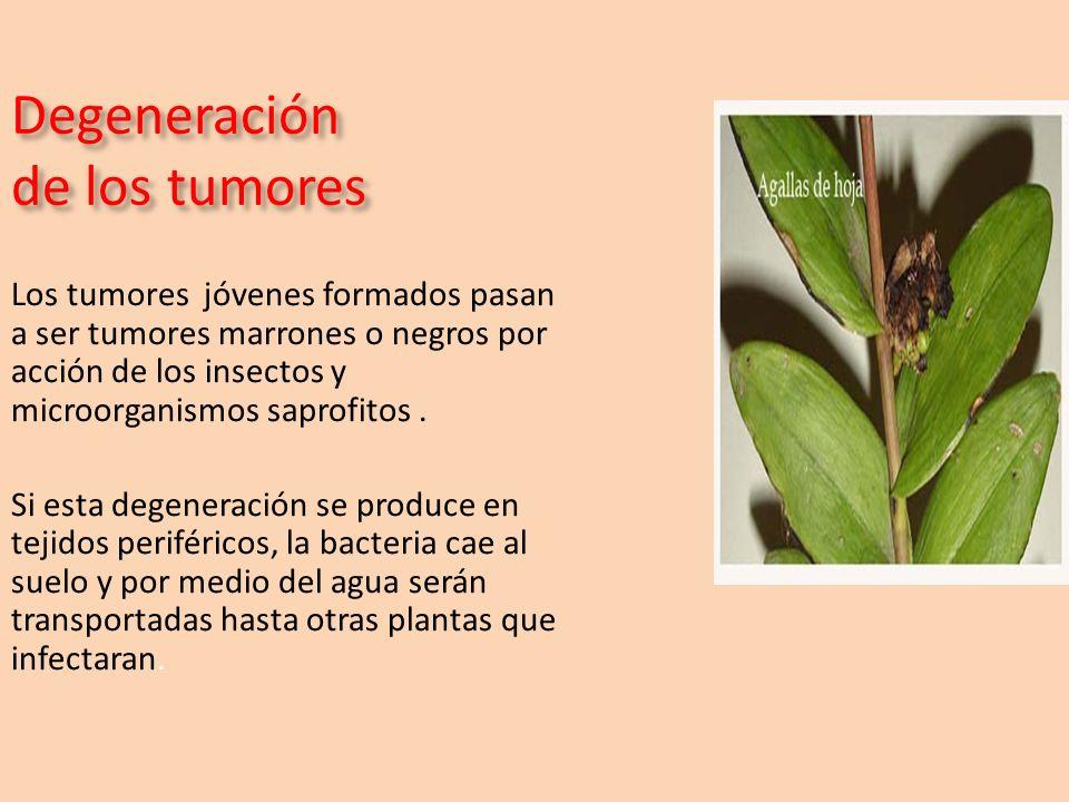 Degeneración de los tumores