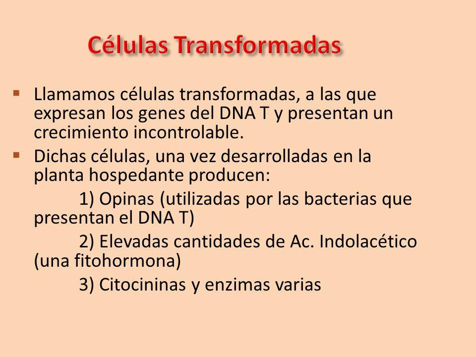 Células Transformadas