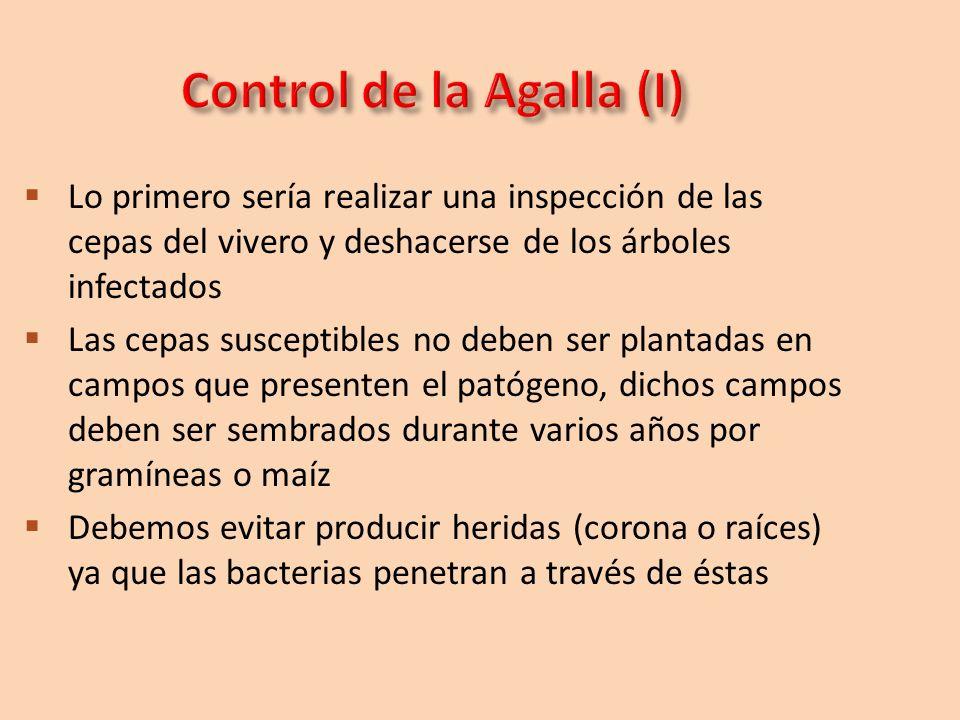 Control de la Agalla (I)