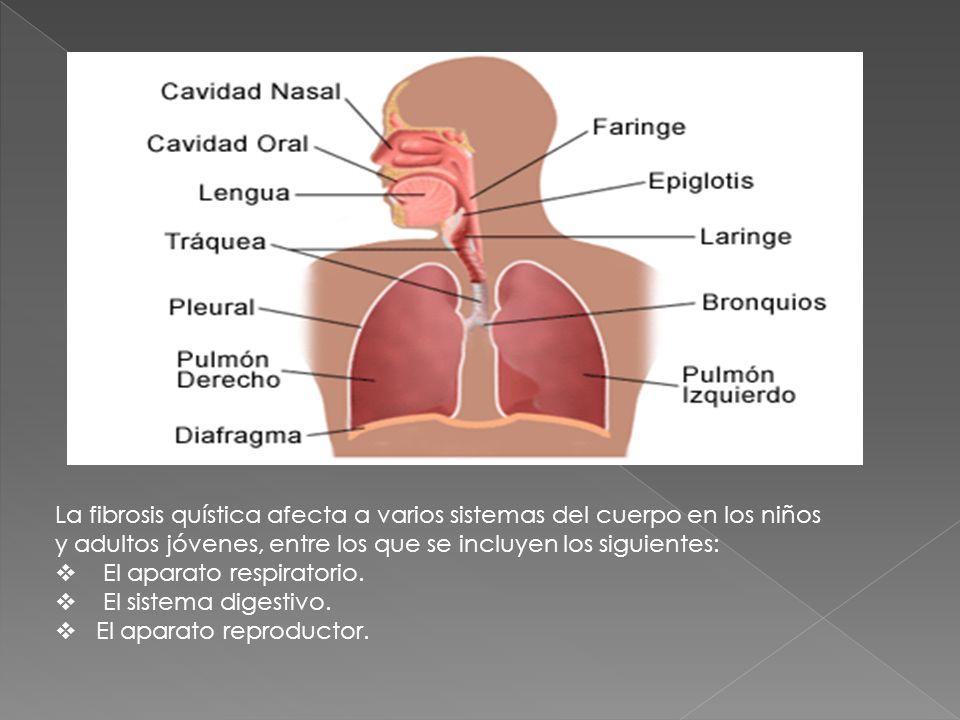 La fibrosis quística afecta a varios sistemas del cuerpo en los niños y adultos jóvenes, entre los que se incluyen los siguientes: