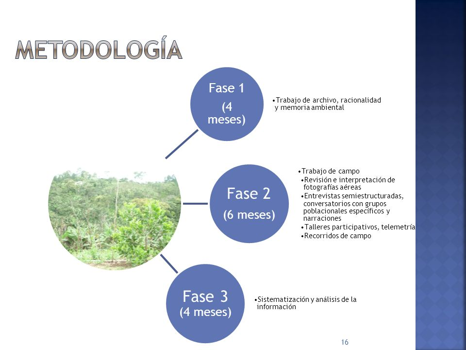 Metodología Fase 3 (4 meses) Fase 2 Fase 1 (4 meses) (6 meses)
