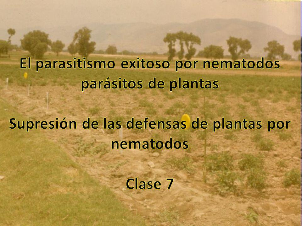 El parasitismo exitoso por nematodos parásitos de plantas Supresión de las defensas de plantas por nematodos Clase 7