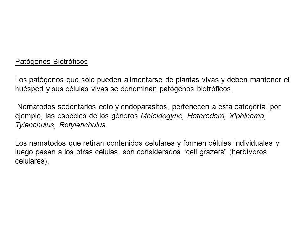 Patógenos Biotróficos