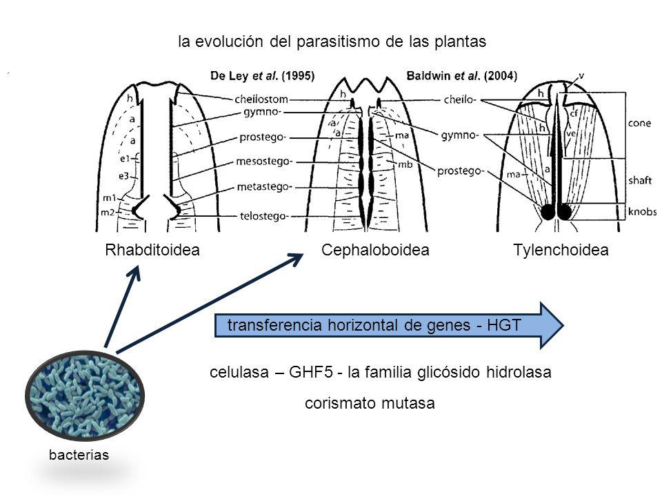 transferencia horizontal de genes - HGT