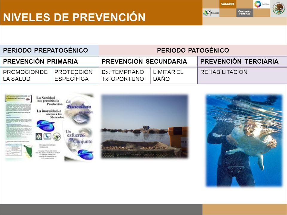 NIVELES DE PREVENCIÓN PERIODO PREPATOGÉNICO PERIODO PATOGÉNICO