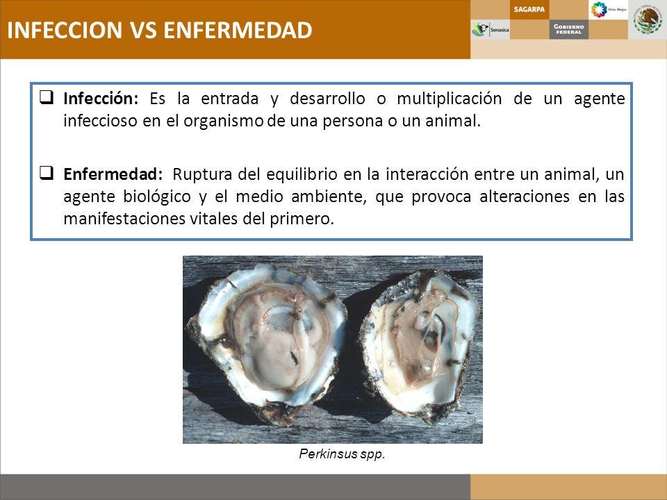 INFECCION VS ENFERMEDAD