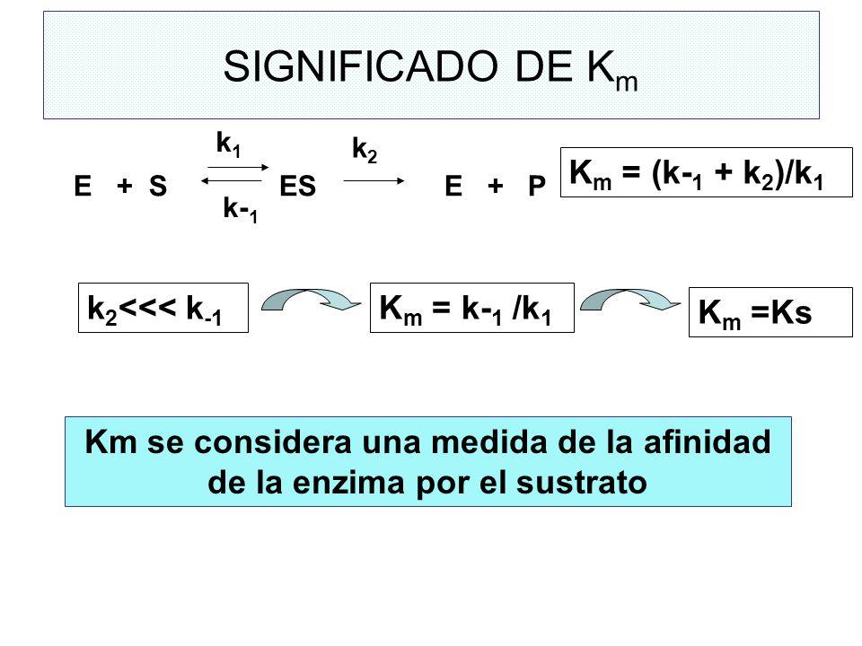 bolilla 1 enzimas naturaleza qu mica propiedades