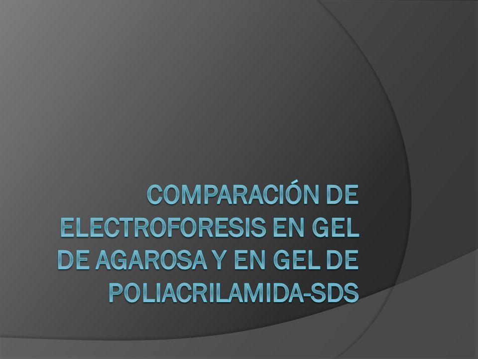 Comparación de electroforesis en gel de agarosa y en gel de poliacrilamida-SDS
