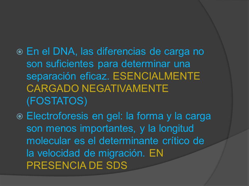 En el DNA, las diferencias de carga no son suficientes para determinar una separación eficaz. ESENCIALMENTE CARGADO NEGATIVAMENTE (FOSTATOS)