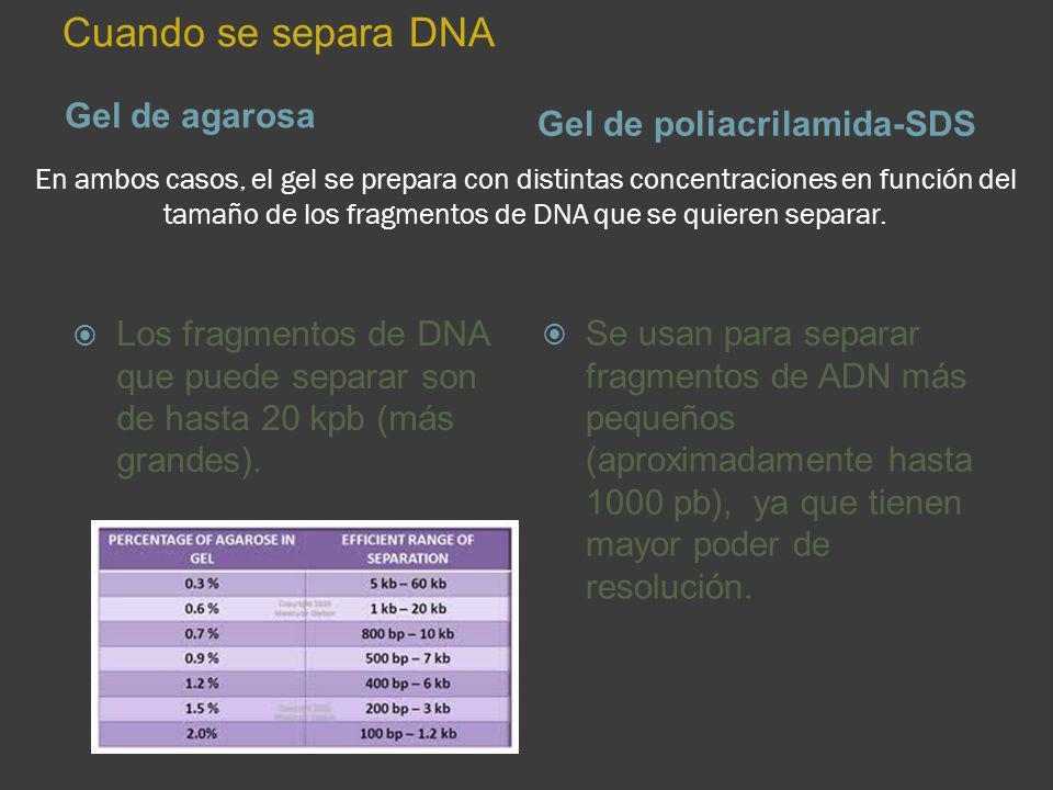 Cuando se separa DNA Gel de agarosa Gel de poliacrilamida-SDS