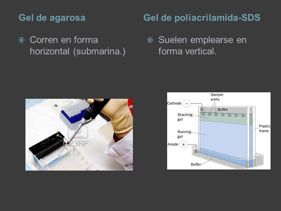 Gel de agarosa Gel de poliacrilamida-SDS.