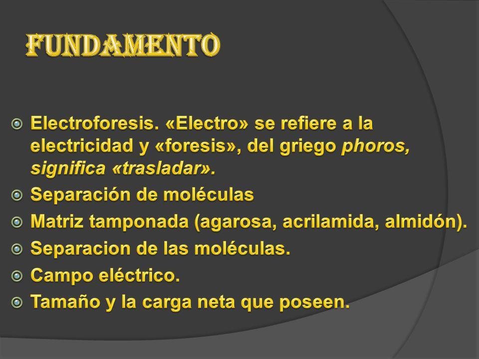 Fundamento Electroforesis. «Electro» se refiere a la electricidad y «foresis», del griego phoros, significa «trasladar».