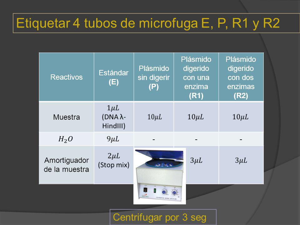 Etiquetar 4 tubos de microfuga E, P, R1 y R2
