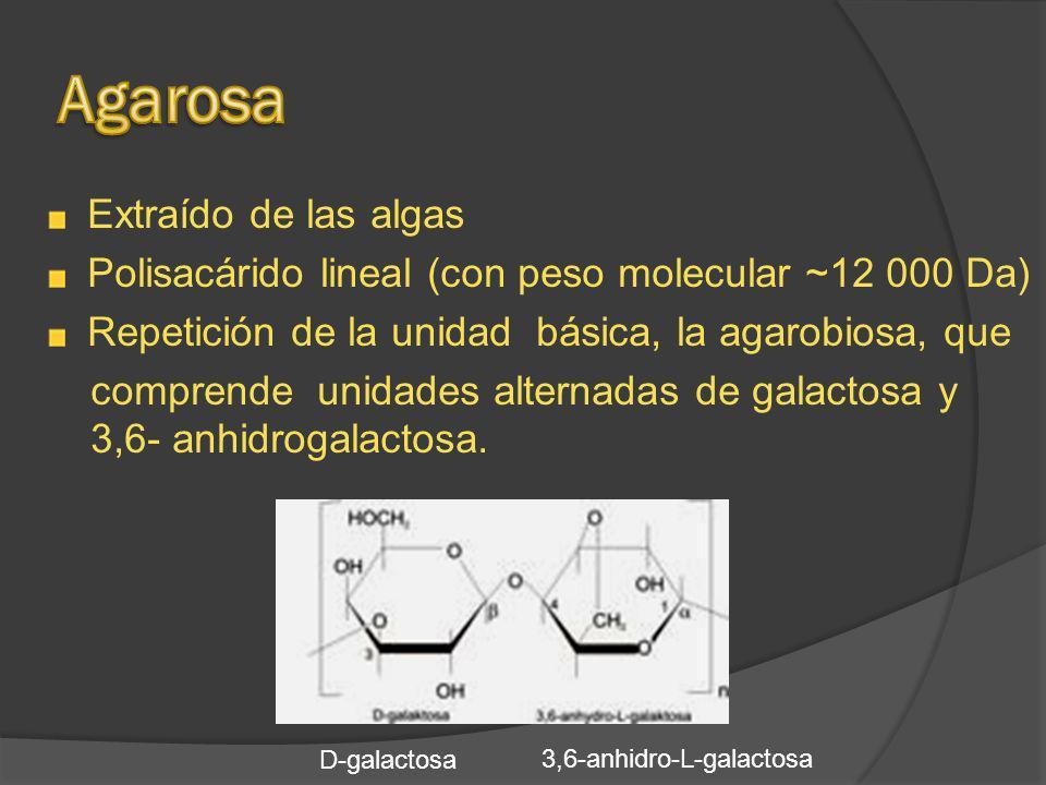 Polisacárido lineal (con peso molecular ~12 000 Da)