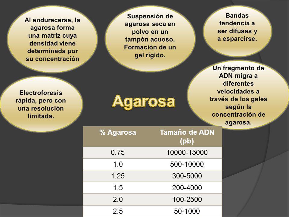 Agarosa % Agarosa Tamaño de ADN (pb) 0.75 10000-15000 1.0 500-10000
