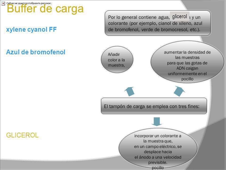 Buffer de carga xylene cyanol FF Migra a aprox 4Kb; Azul de bromofenol