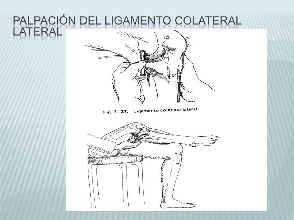 Hermosa Ligamento Colateral Lateral Ornamento - Imágenes de Anatomía ...