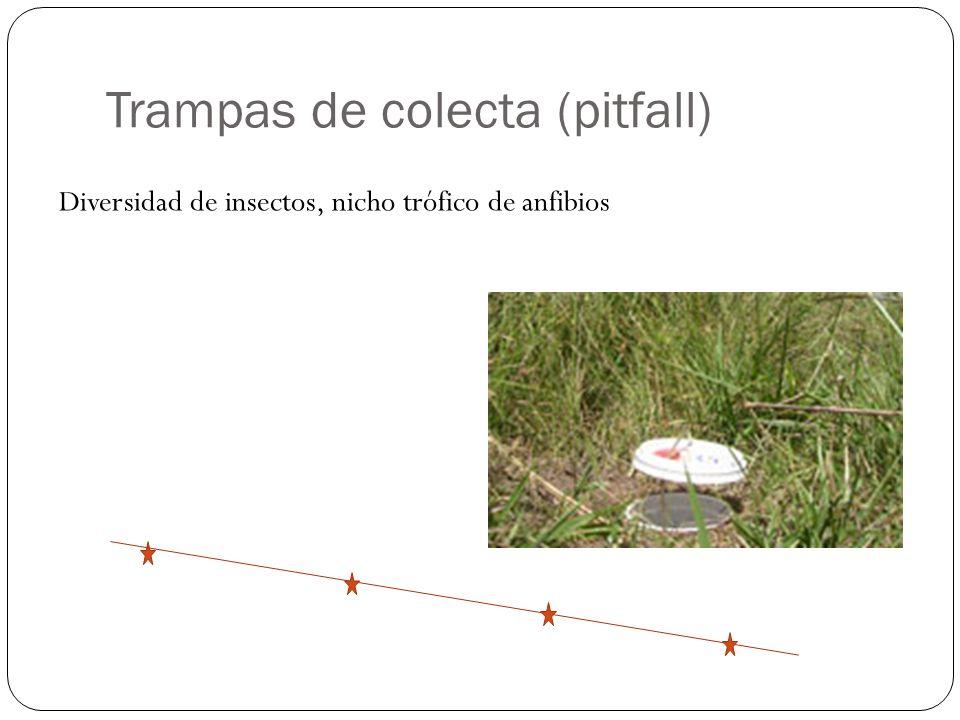 Trampas de colecta (pitfall)